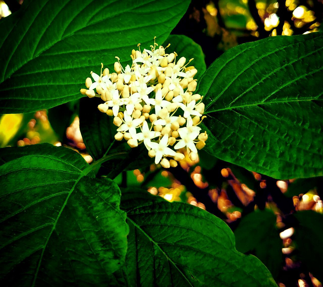 The Great Outdoors With Adobe Epic Shot Photography Eyeem_x_getty_collection Flowers, Nature And Beauty Eye For Photography Gettyimagesinstagramgrant Nature's Diversities Getty Image-collection Nature_collection Showcase May EyeEm Nature Lover Getty X EyeEm Images Northwestnature Gettyimagesgallery Spring 2016 EyeEmxGettyImages EyeEm Best Shots - Nature Getty & EyeEm Collection Gettyinstagramgrant Gettyimages Getty+EyeEm Collection Getty X EyeEm Wild & Pure Flower Photography EyeEm Best Shots
