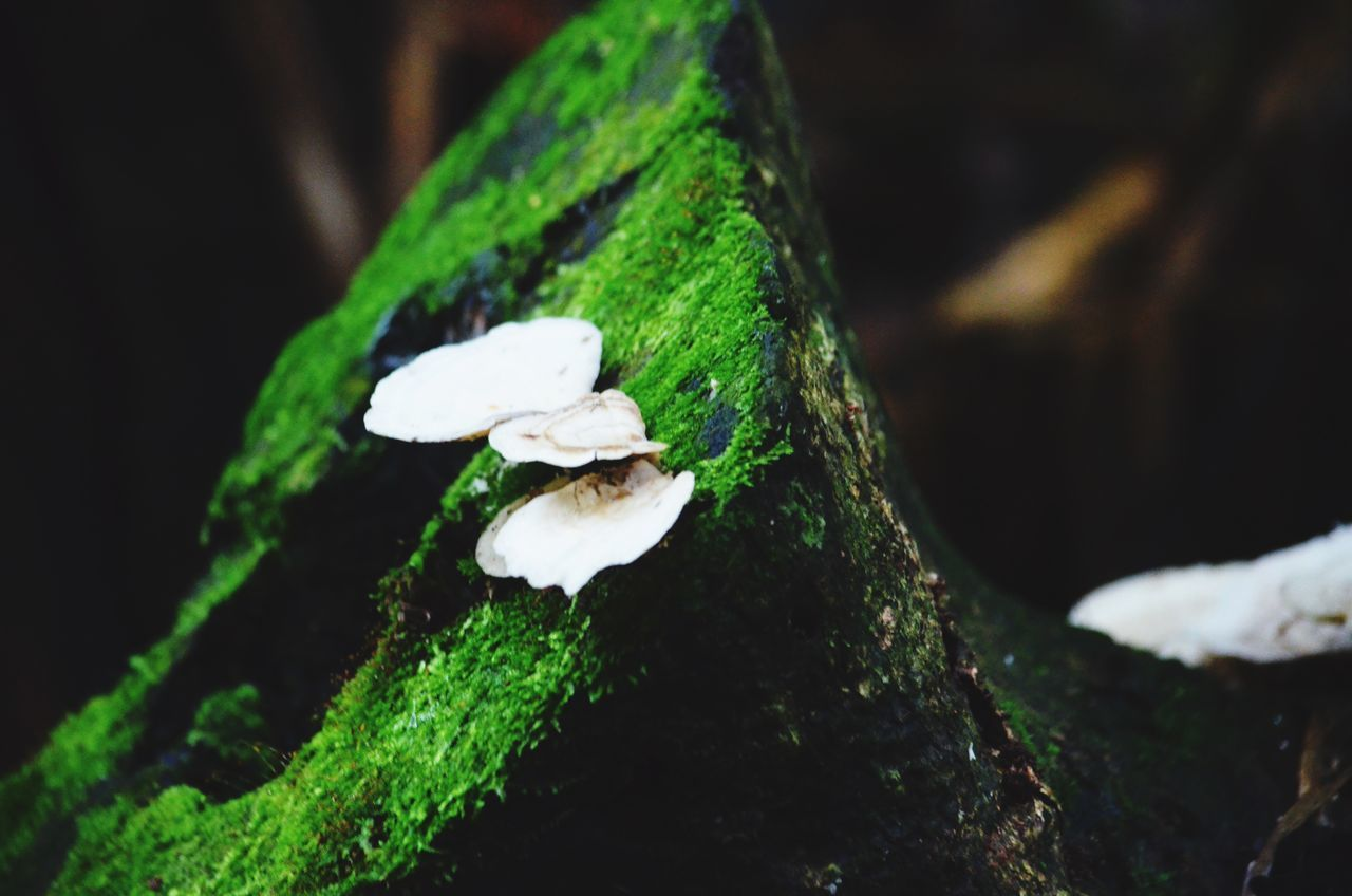 There's A Fungus Among Us Moss Moss & Lichen Costa Rica
