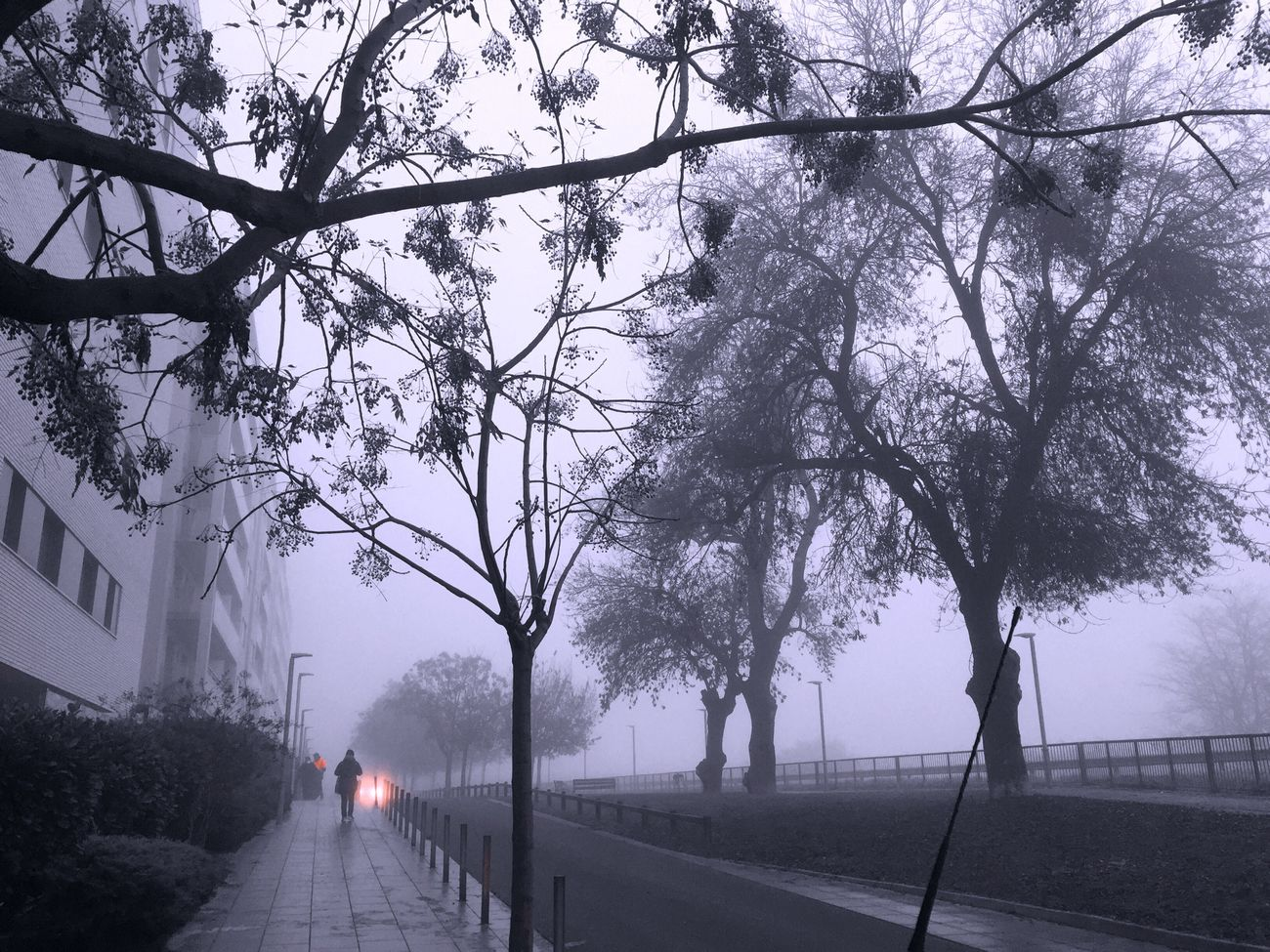 Foggy Morning Bw_lover Bw_collection