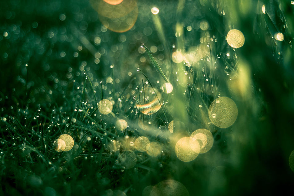 Beauty In Nature Bokeh Bubbles Close-up Day Drop Fragility Freshness Full Frame Grass Green Color Growth Growth Meadow Nature No People Outdoors Water