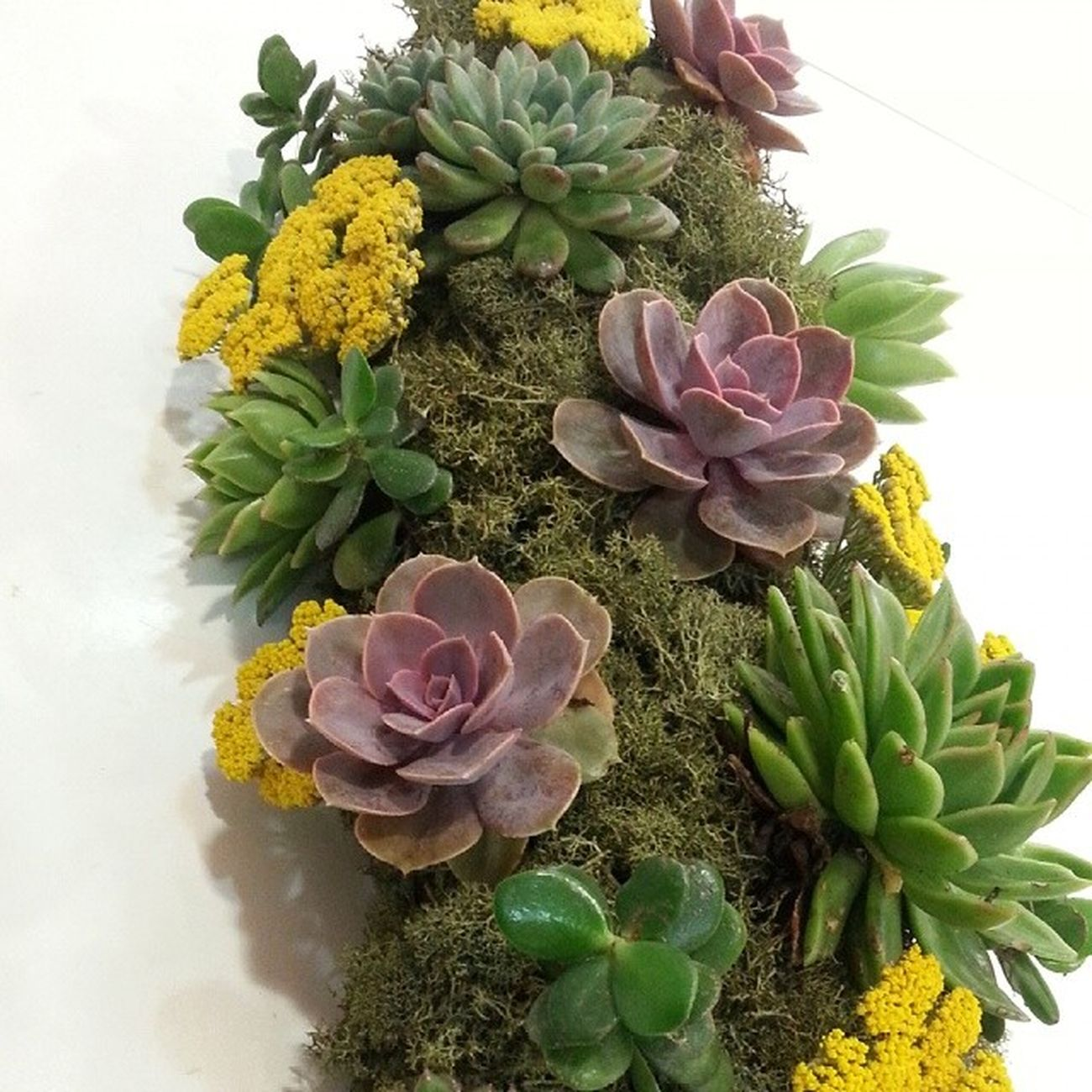 Wedding arrangement for table with succulents and solidago. Arreglo de mesa para boda con crasas y solidago. Flores Aleafloristerias Flowers Wedding Bodas Vigo Succulents Crasas Arrangement Arreglo Solidago Moss