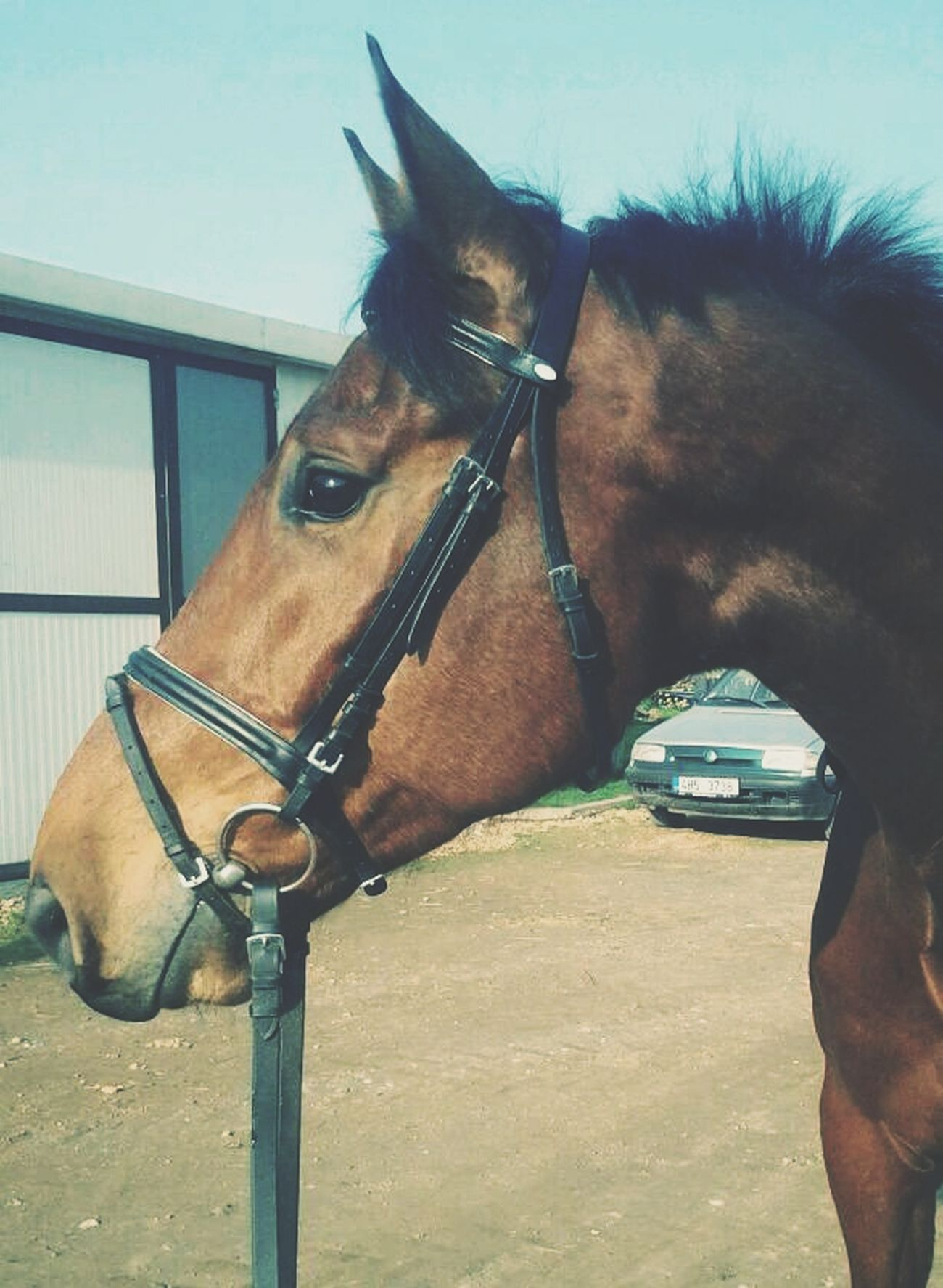 Horse Denis LoveLove ♥