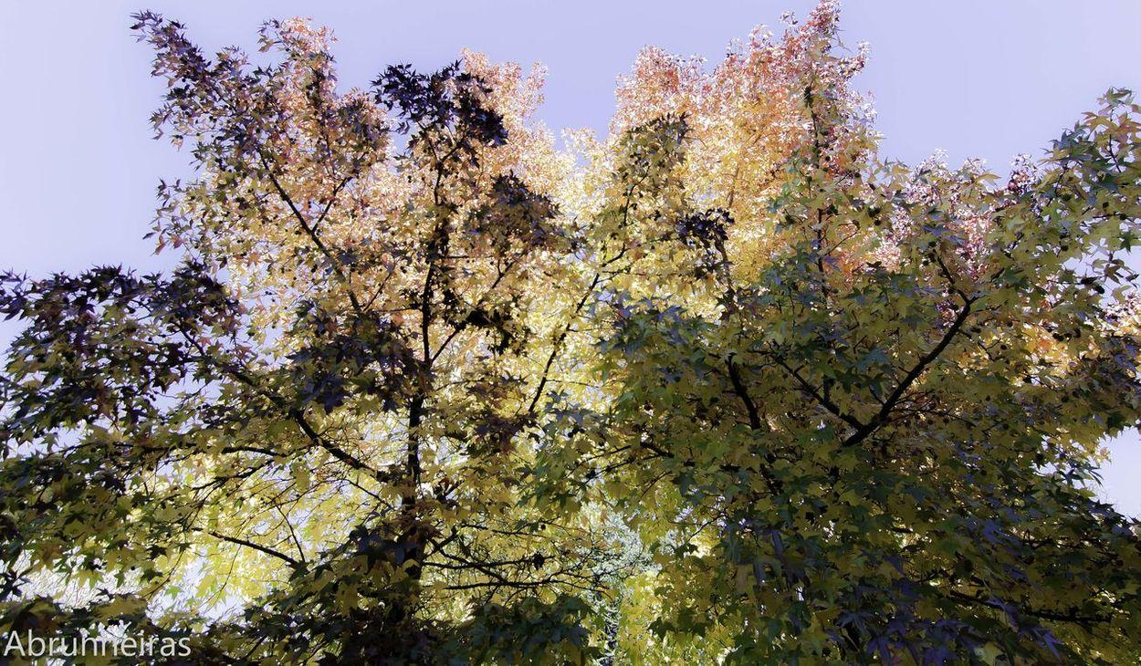 Walking Around Hugging A Tree Where Leaves Gone? Enjoying Life