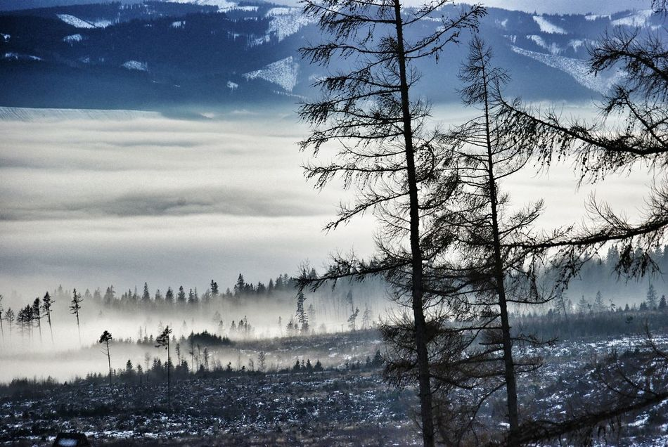 Landscapes With WhiteWall Winter Landscape Landscape Winter Winter Scenery Tatra Mountains Slovakia Snow Mountains Landscape Layers Layers Fog Larches Larch Tree Larch