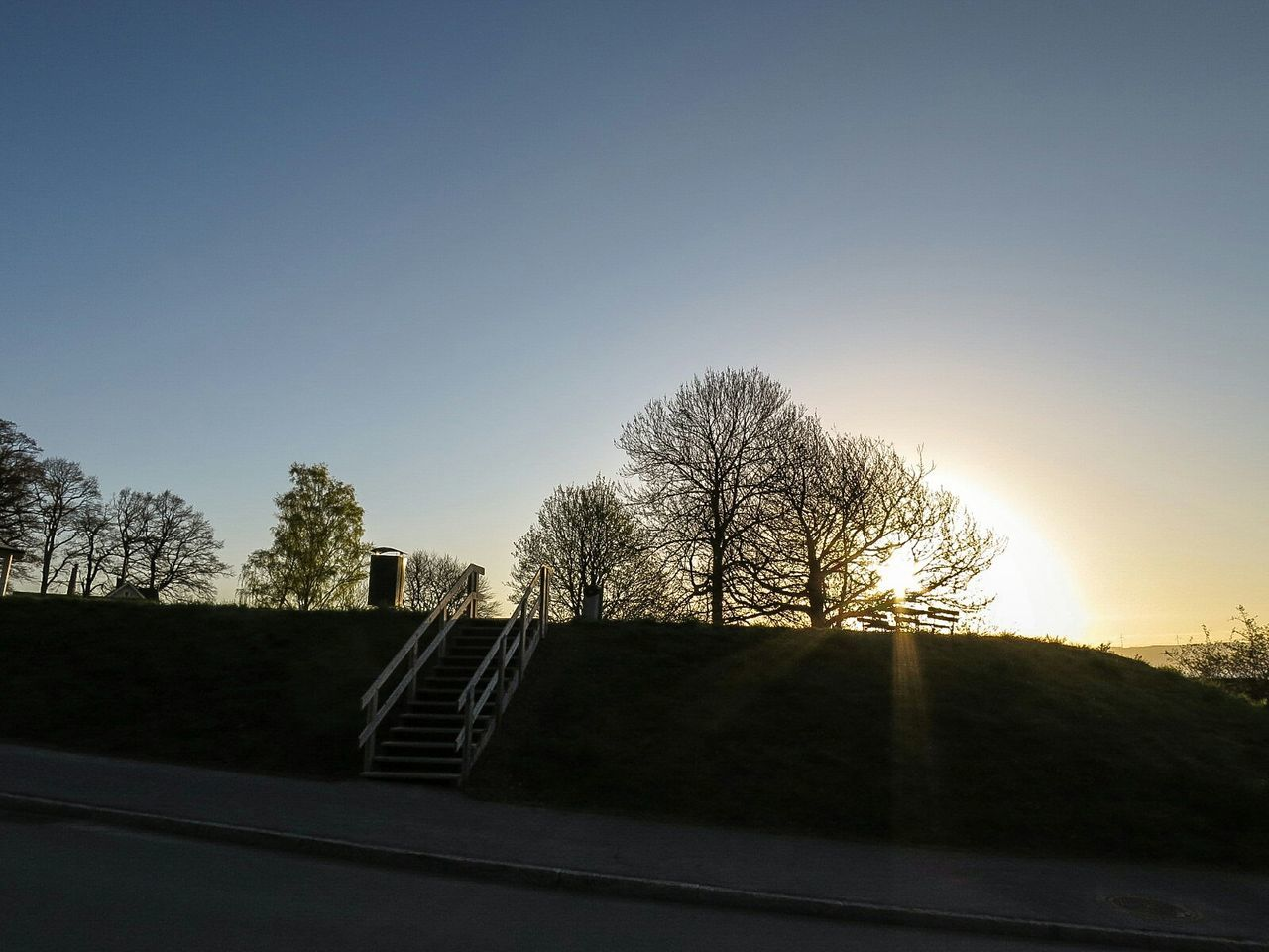 tree, clear sky, no people, bare tree, sunlight, outdoors, road, day, sky, nature, sport