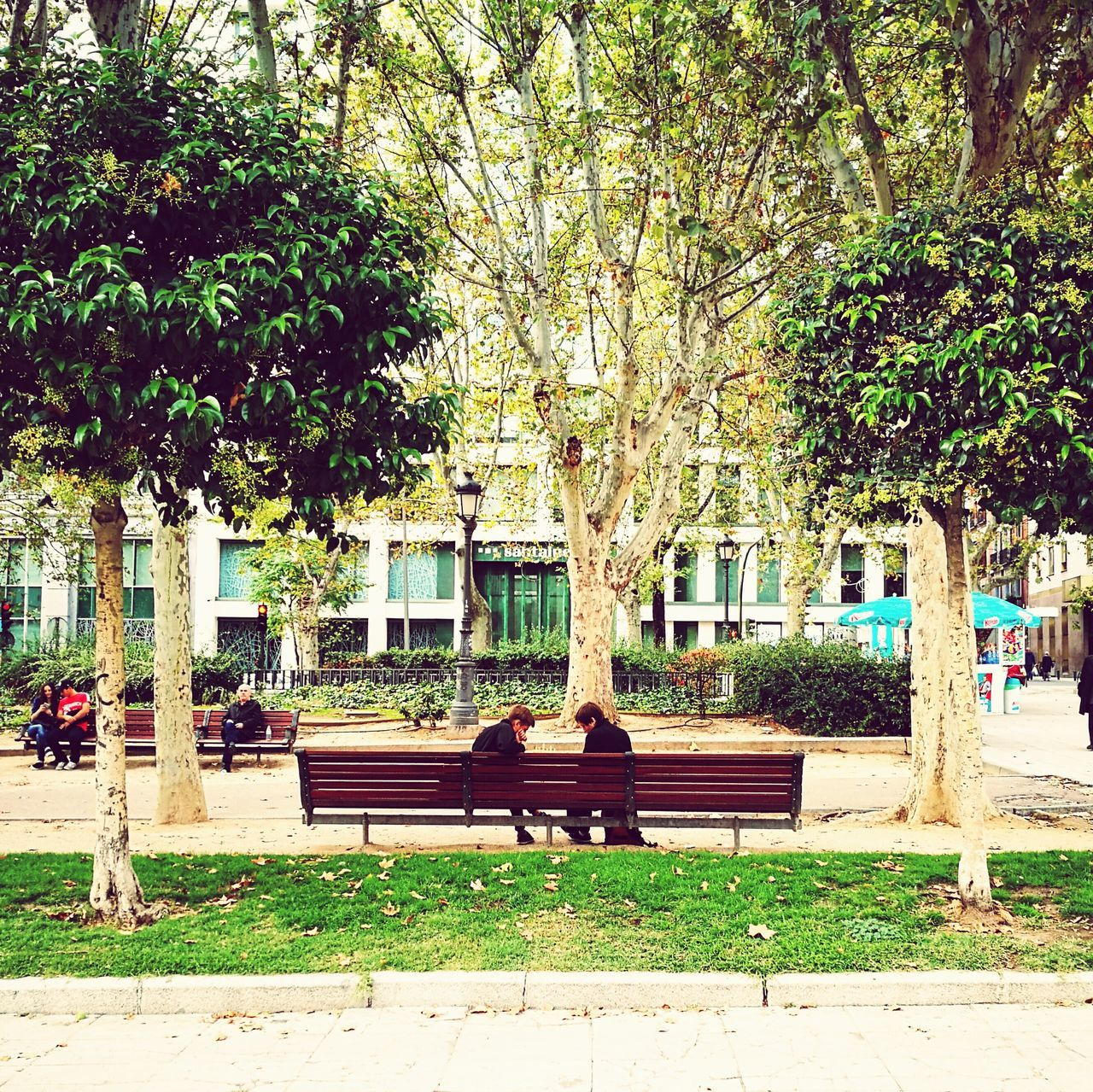 Chess Bench Park Bench Tree Park Outdoors City Life Green Color City Plant Day First Eyeem Photo