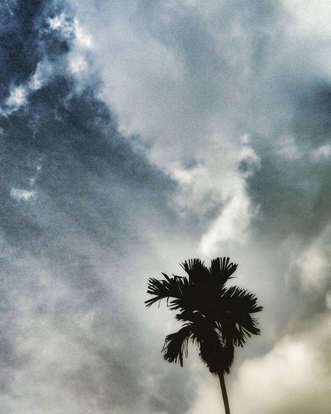 Natural Sky Evening SriLanka Beautiful Skyhasnolimit Relax Relaxing Live Explore Instergram Mostbeautiful Clouds