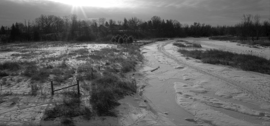 morning shadows Shadows Monochrome Blackandwhite Contrast Shadow Horizon Tree Nature Pinaceae Agriculture Landscape Outdoors No People Sky Day