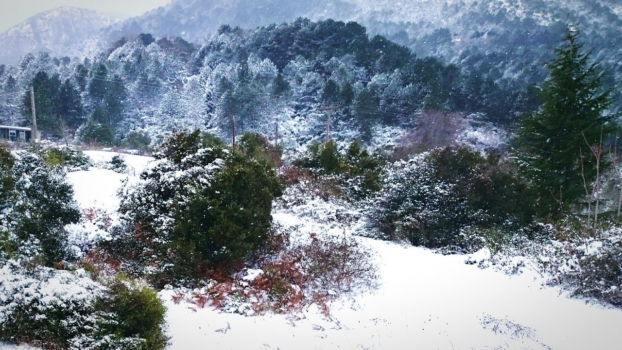 Idyllic View Of Tree Mountains During Winter