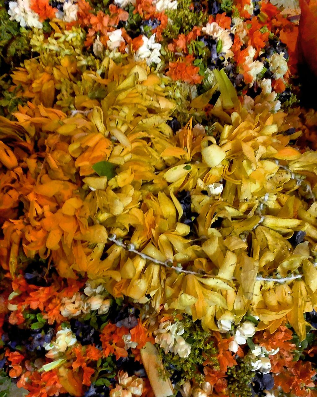 flower, fragility, yellow, nature, beauty in nature, petal, flower head, freshness, close-up, flower market, no people, marigold, growth, outdoors, day