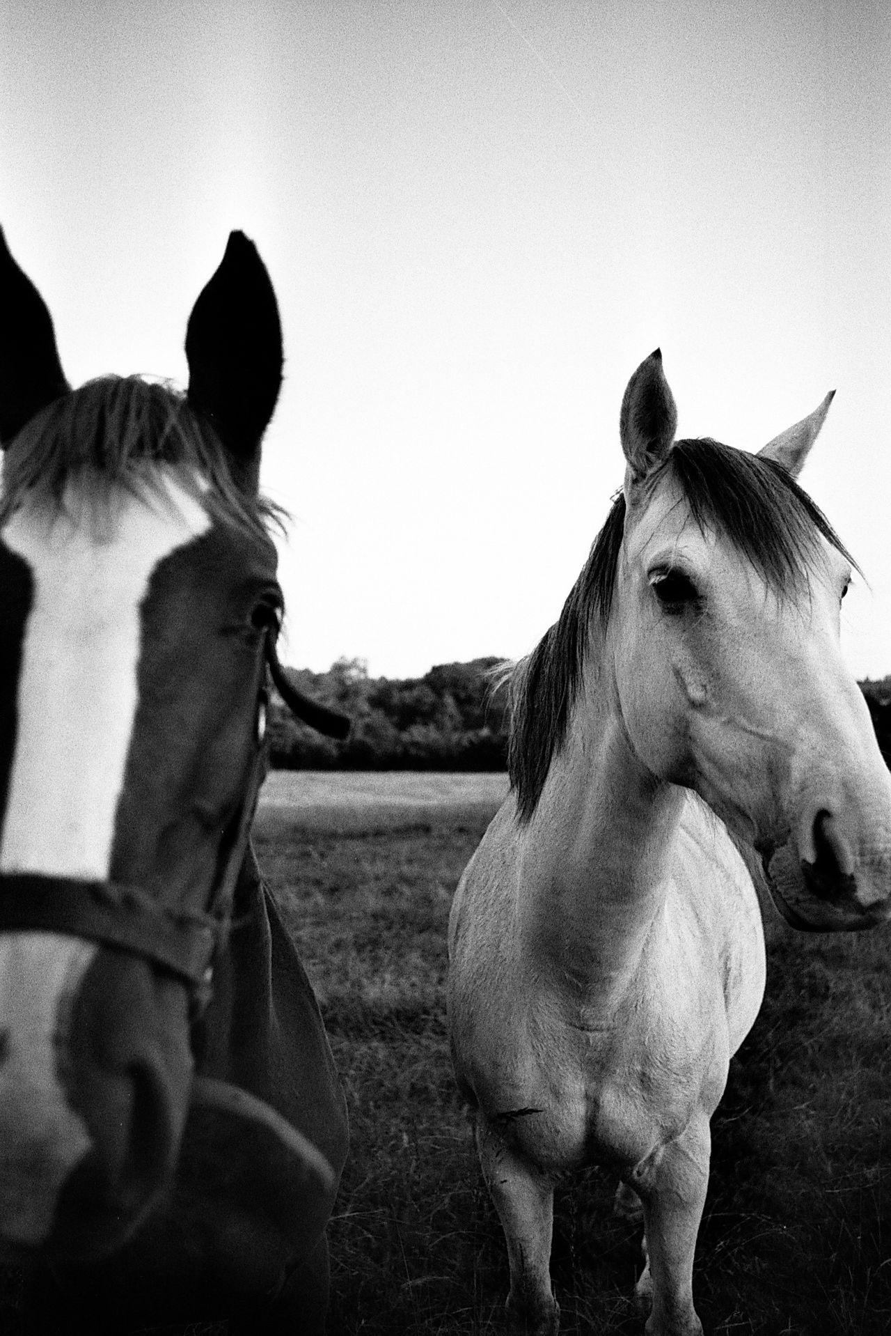 35mm 35mm Film Analogue Photography Animal Themes Blackandwhite Brother Film Film Photography Filmisnotdead Horse Ishootfilm Portrait