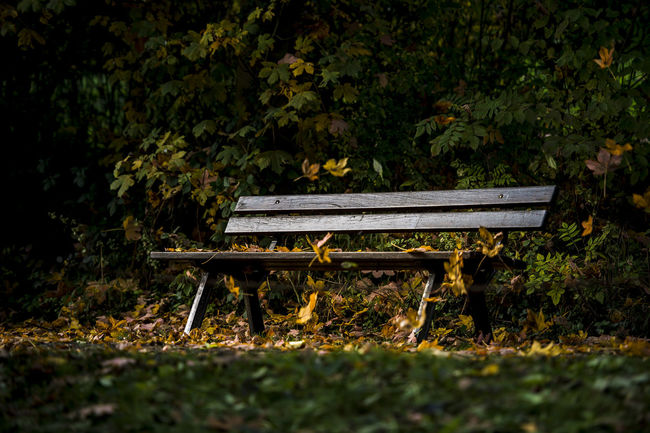 Autumn Autumn Colors Bench Day Falling Leaves Foliage Foliage On Bench Foliage, Vegetation, Plants, Green, Leaves, Leafage, Undergrowth, Underbrush, Plant Life, Flora Horizontal Nature No People Outdoors Park Bench Sunbeam On Bench Sunbeams Tree Wood - Material Wood Bench