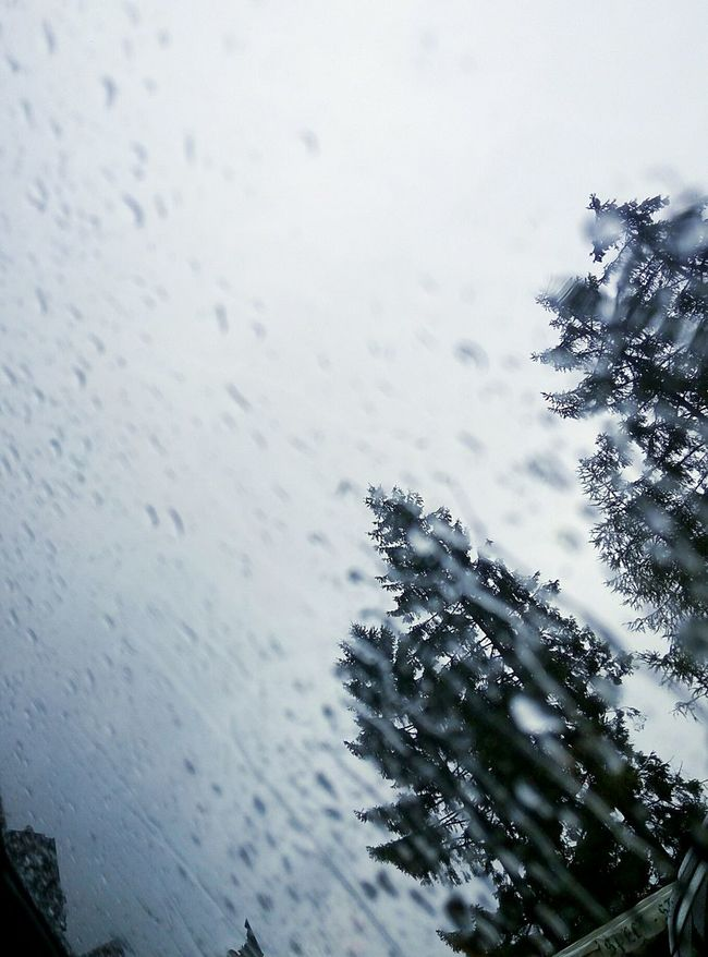 Acqua Colori Windy Tempesta Rain Day Mountain Piante Mountains Goccia D'acqua Goccia Rain Rainy Days Plants Estate Colors Montagne Cloudy Nuvole Nuvoloso Cloudy Day Sky And Clouds Cielo Sky Weather