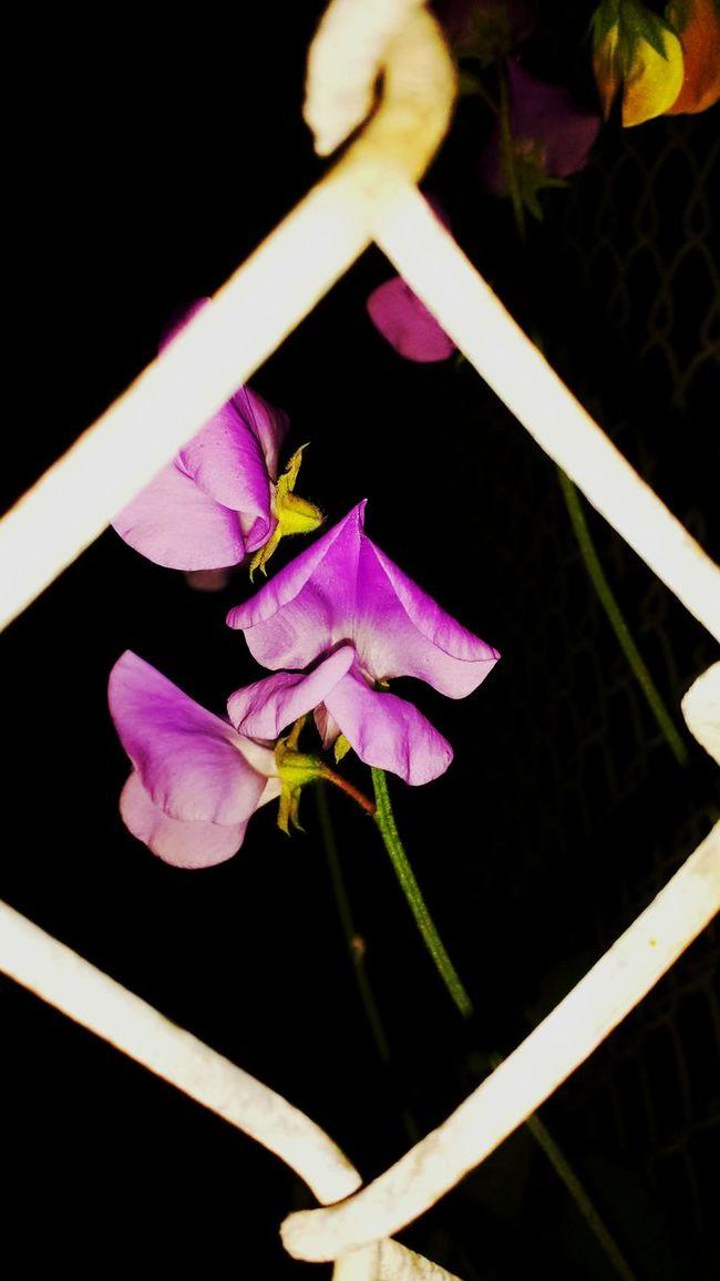 Flowers,Plants & Garden Photography Flower Porn Taking Photos