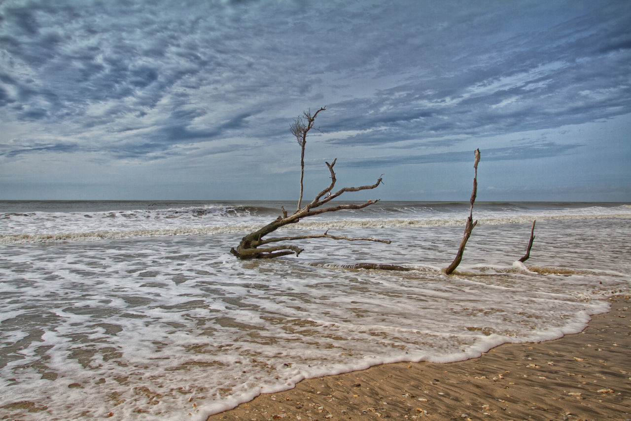 Beach Beauty In Nature Cloud - Sky Day Dead Tree Horizon Over Water Nature No People Outdoors Sand Scenics Sea Sky Tranquil Scene Tranquility Tree Water