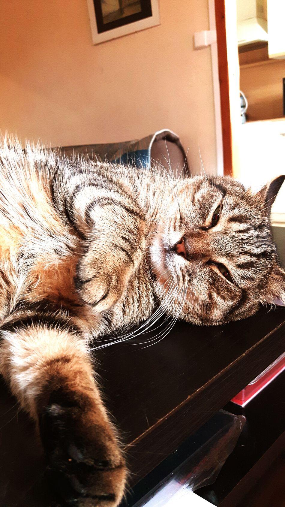 Always Be Cozy :-):-):-) Cat Cat Lovers Cats Of EyeEm Catoftheday EyeEm Gallery Eye4photography  Eyeemphotography