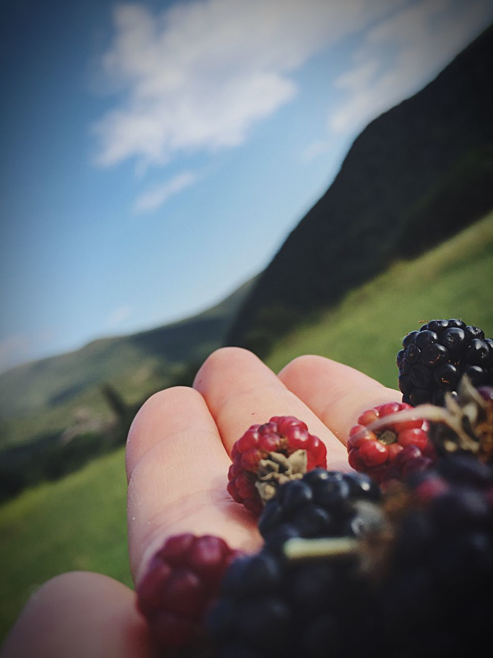 human hand, fruit, human body part, human finger, one person, holding, real people, close-up, selective focus, food and drink, blueberry, food, outdoors, day, healthy eating, nature, freshness, sky, people