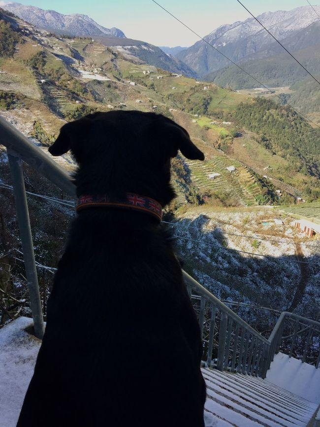 Dog Snow ❄