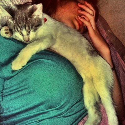 Ni tranquila duerme arriba mio Gata Cat Jerry