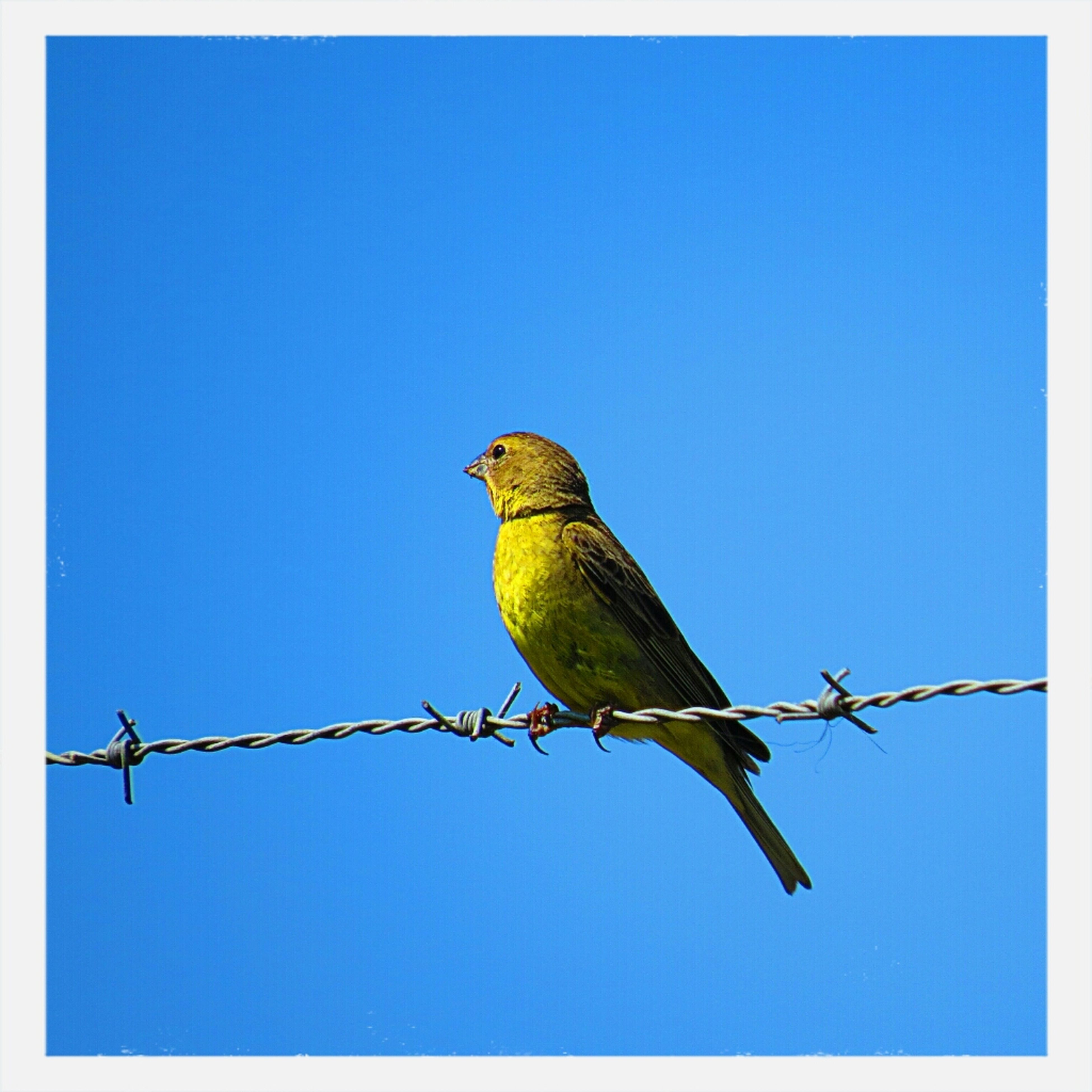 animal themes, bird, animals in the wild, wildlife, one animal, perching, clear sky, low angle view, full length, blue, copy space, zoology, nature, day, outdoors, no people, branch, side view, spread wings, green color