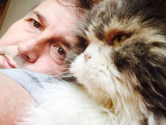 Enjoying Life Brasil ♥ That's Me Hello World Lovecats❤️ Cat I Love My Cat I Love My Cats  Cat♡ Eu