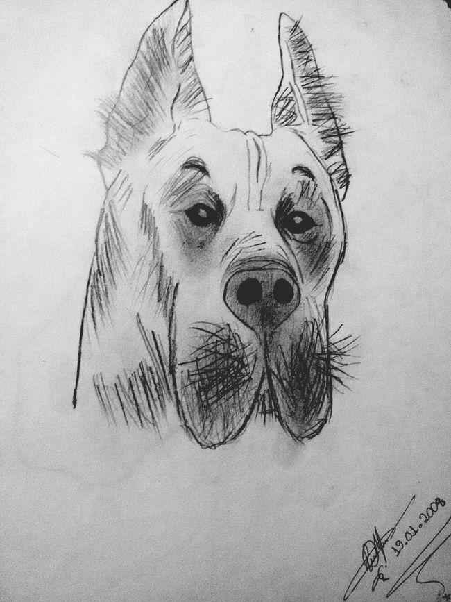 Pet Portrait Dibujo Drawing Art Artistic Dog Animal_collection LM_colection Graphite Black & White