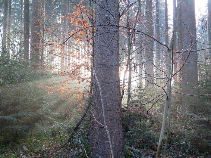Forest Photography Nature Trees And Nature Sun Behind The Tree Sunrais Nature Photography