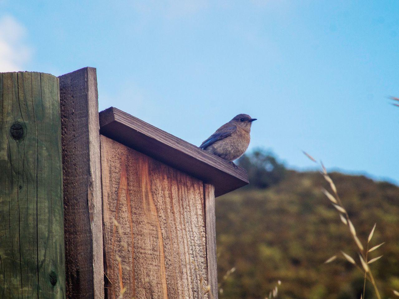 Bird Nature Outdoors San Luis Obispo Cal Poly