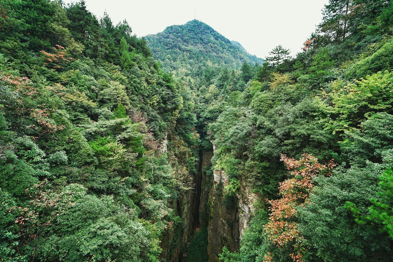 Beautiful stock photos of china, Beauty In Nature, China, Day, Growing