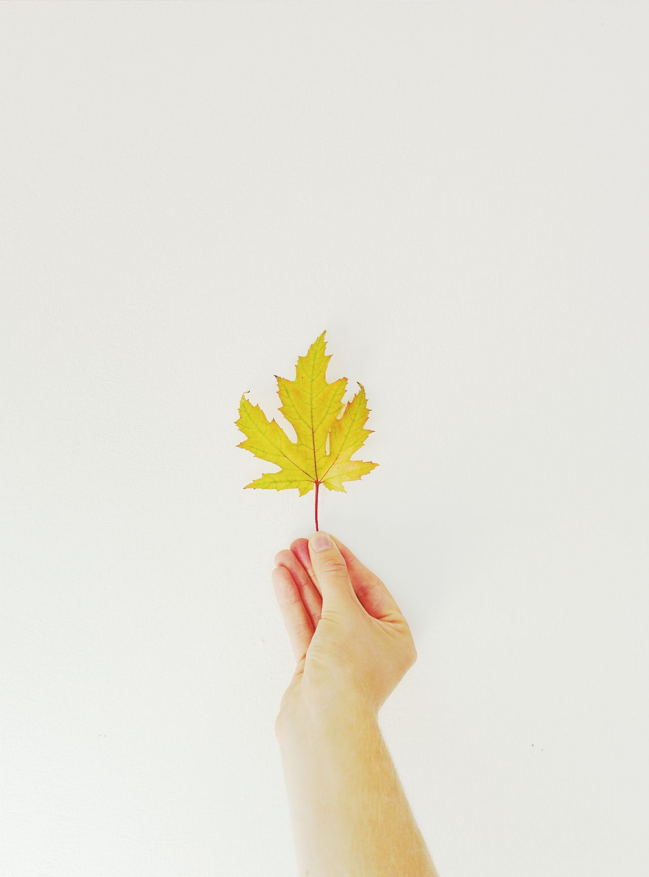 Beautiful stock photos of leaf, Environment, Fragility, Freshness, Holding