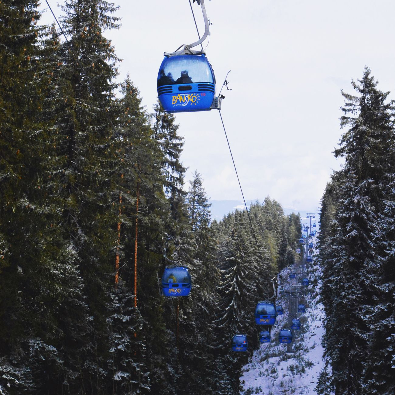 Winter Snow Tree Cold Temperature Nature Pine Tree Beauty In Nature Forest Scenics Tranquility Tranquil Scene Ski Lift Growth Landscape Outdoors Day No People Overhead Cable Car Coniferous Tree Mountain