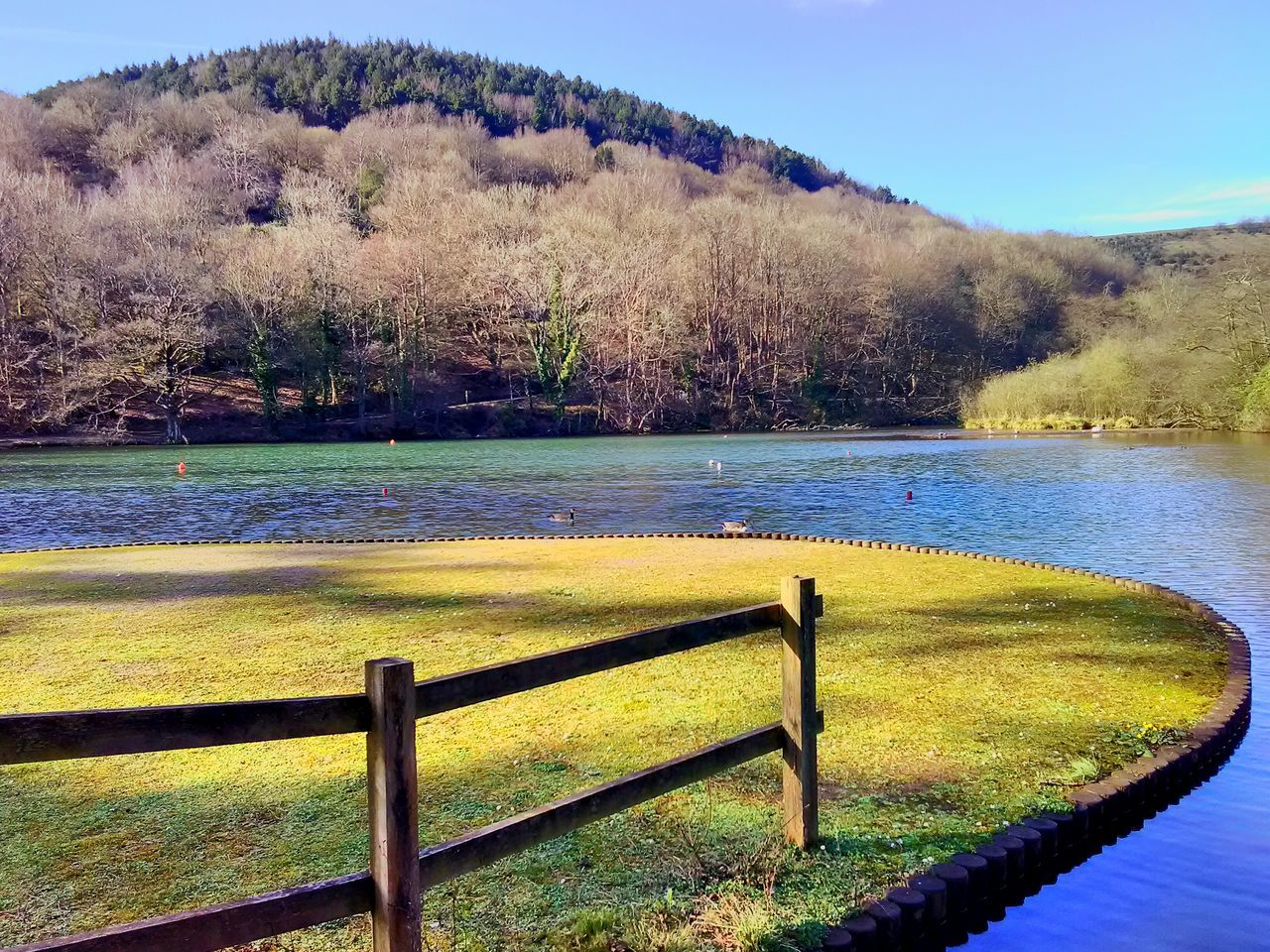 Margam Lake Lakeview Tranquil Scene Beauty In Nature Tranquility Tree Scenics Moss Sunlight Nature Day Water Outdoors Landscape Sky Colour Of Life Bushes Trees