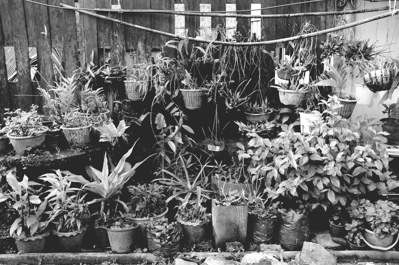 .. Nature Monochrome Black & White Black And White Photography