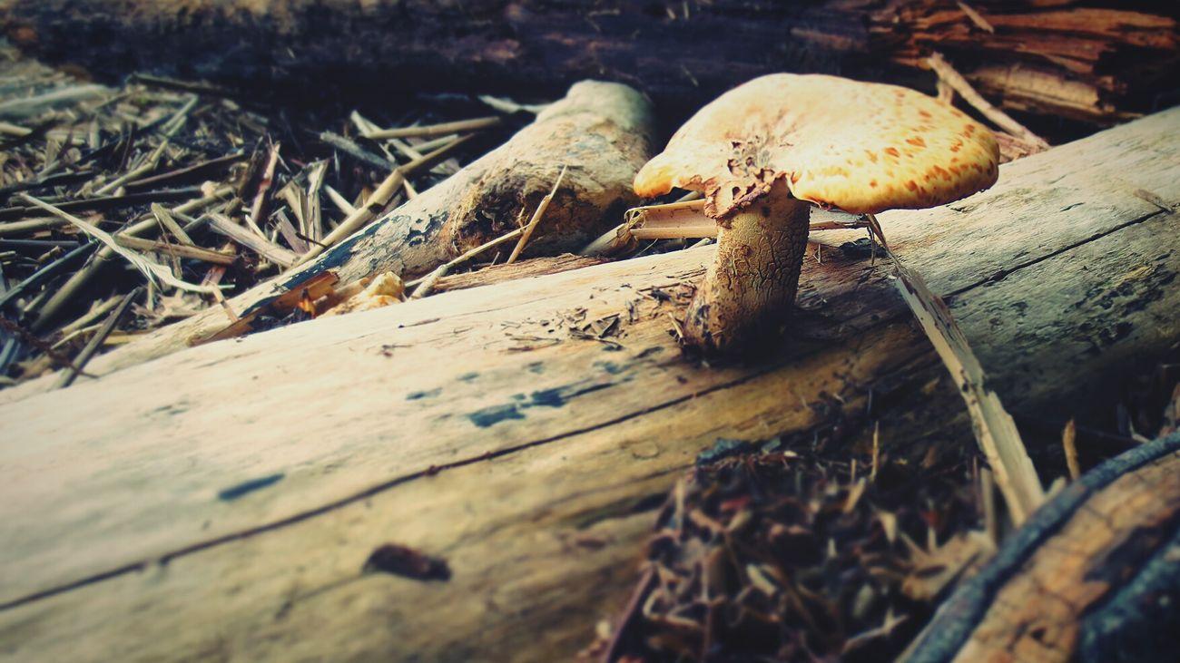 Wood Bois Les Champignons D'arbres ! Tree Mushrooms Brown Brun Quebec, Canada Ileauxgrues RemiB 100813