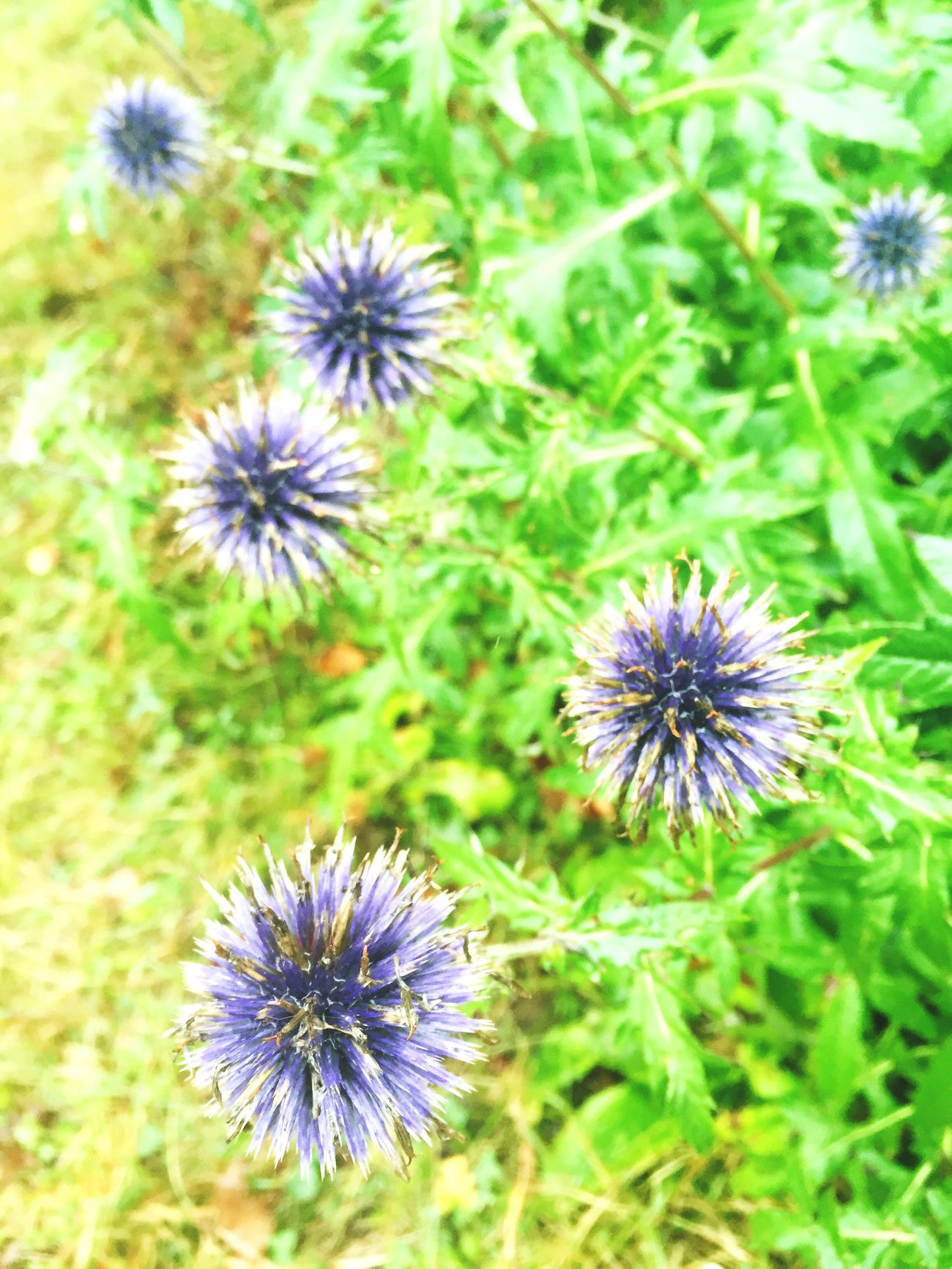 Flower Freshness Simplicity Fragility Purple Nature Beauty In Nature Green