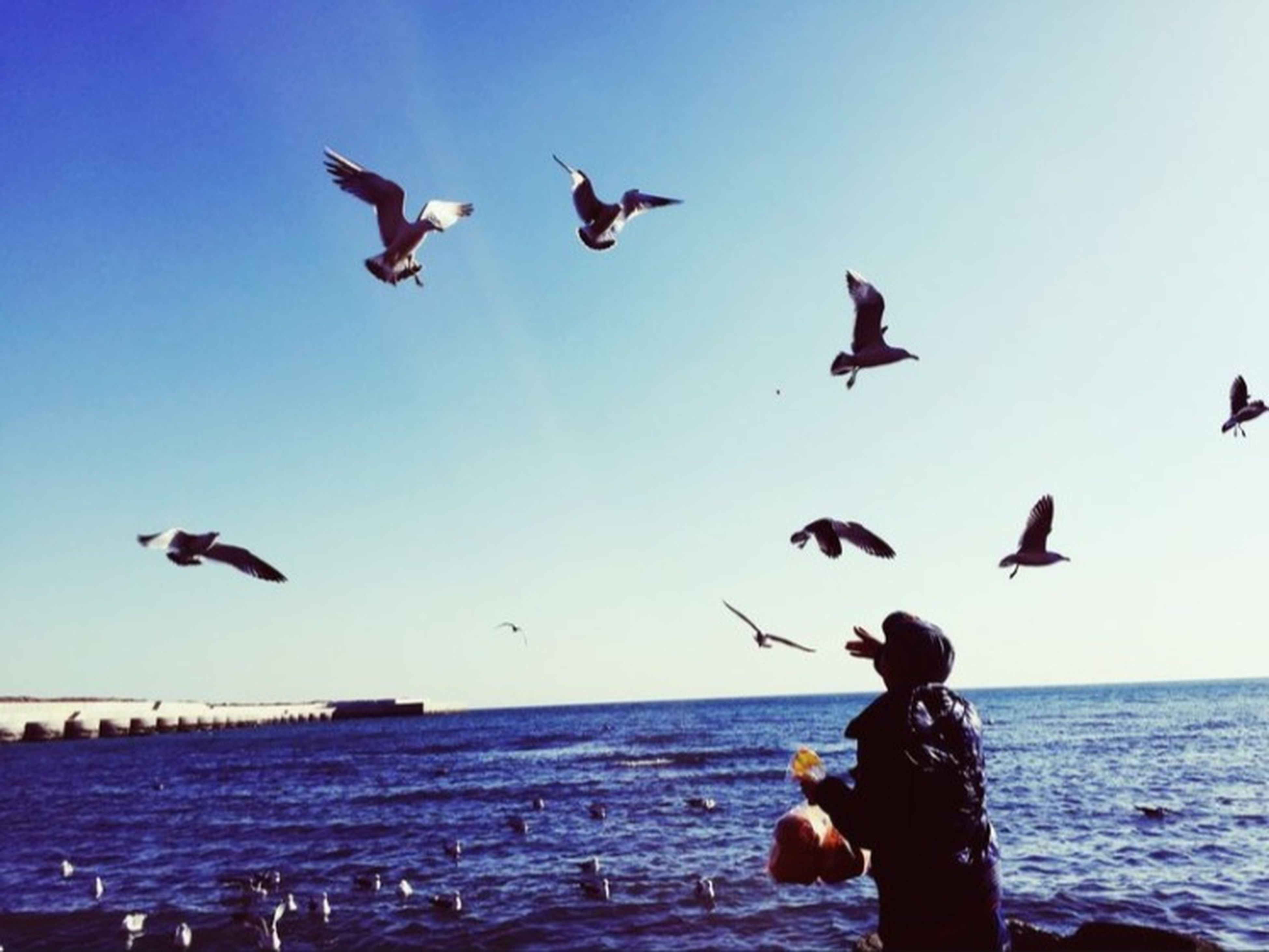 bird, animals in the wild, sea, animal themes, horizon over water, water, wildlife, seagull, flying, flock of birds, blue, beach, clear sky, sky, spread wings, shore, medium group of animals, nature, togetherness