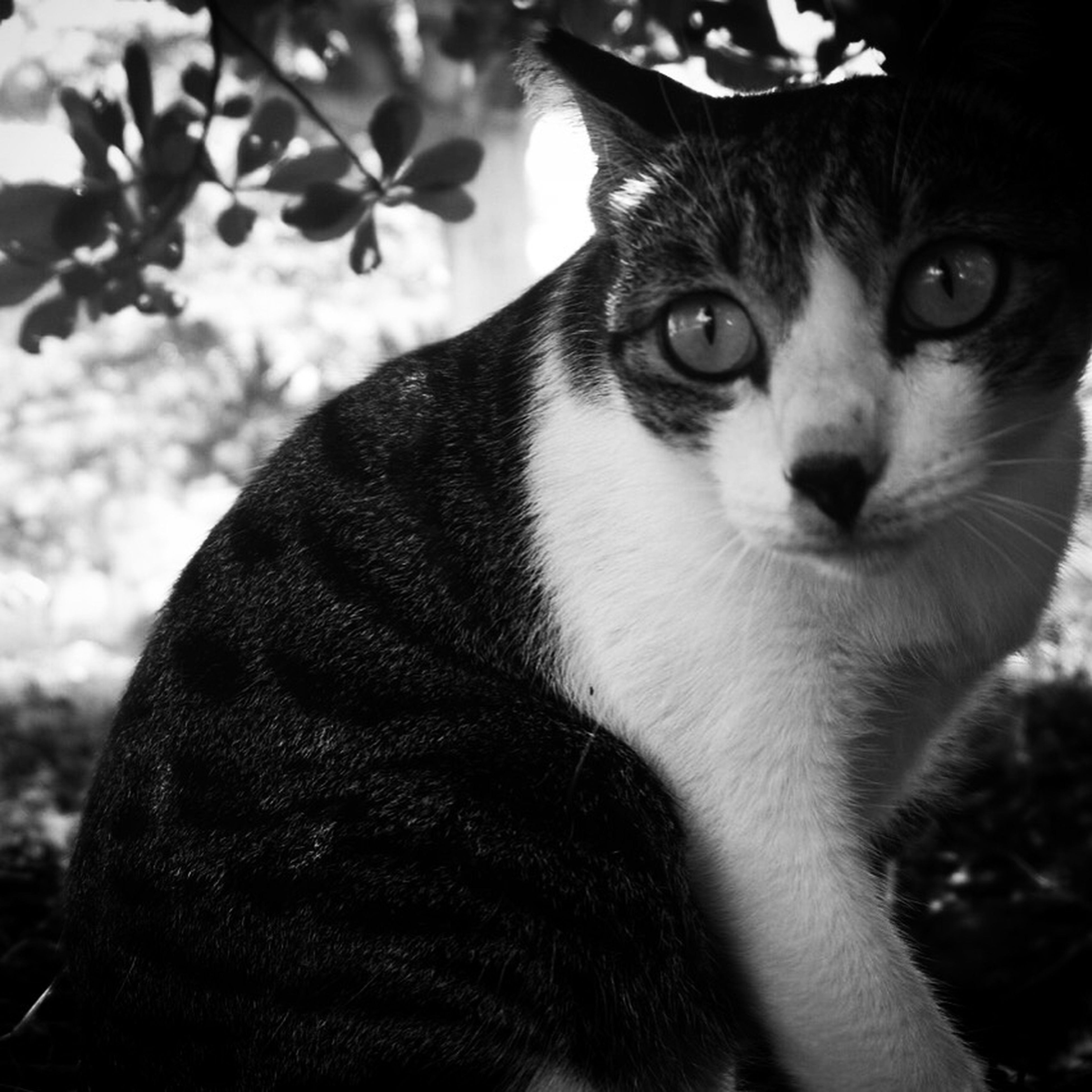 Black And White]ite Cats Animal