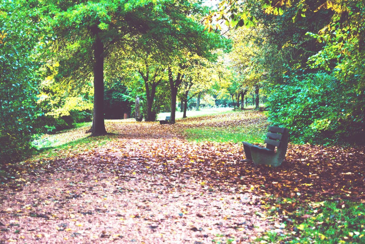 tree, nature, autumn, tranquility, growth, beauty in nature, leaf, scenics, tranquil scene, landscape, park - man made space, change, outdoors, no people, day, grass, scenery