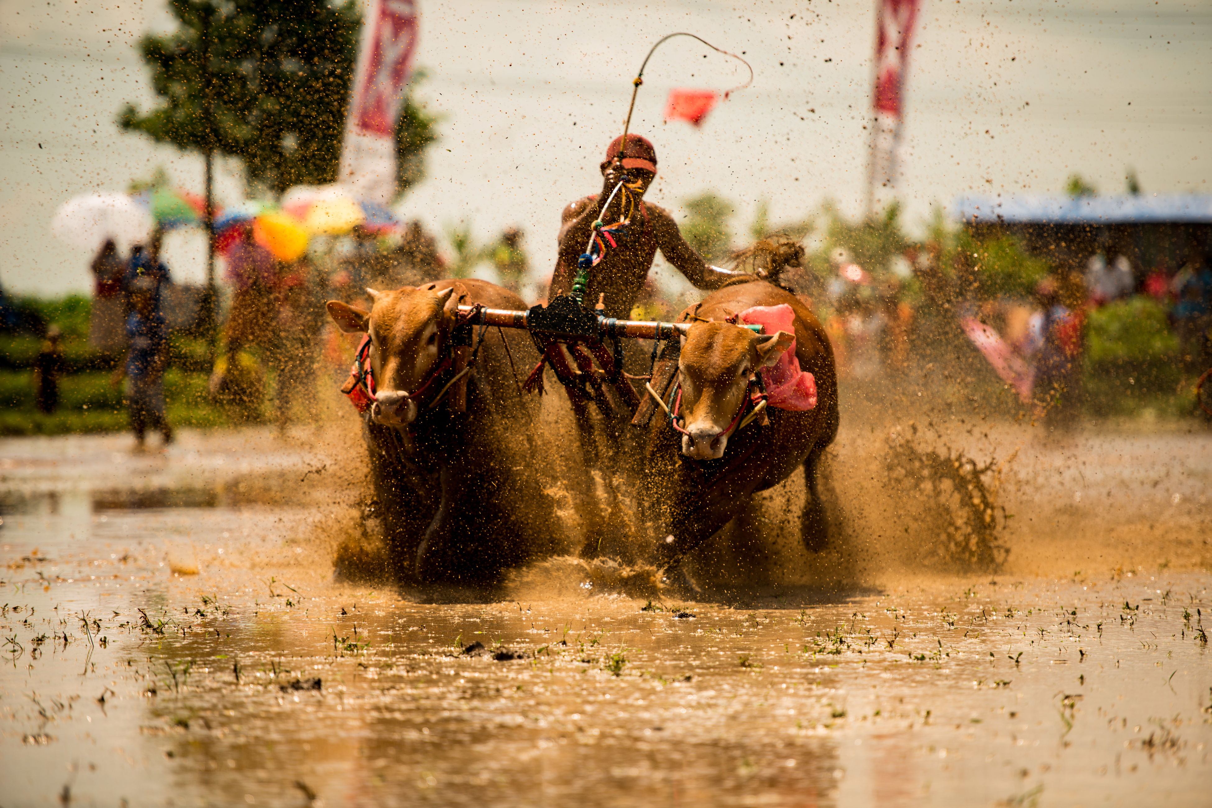 sports race, riding, speed, competition, splashing, water, running, motion, fun, gambling, excitement, sport, horse racing, adult, mammal, sports track, people, competitive sport, men, domestic animals, outdoors, day, only men, sports team, motocross, adults only