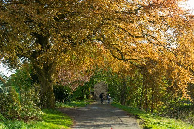 England🇬🇧 Countryside Yorkshire Dales Tree Nature Travel Photography First Eyeem Photo Fresh On Eyeem