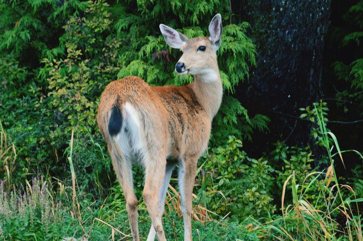 Edge Of The World Protecting Where We Play Mountains Deer Mountain Wildlife EyeEm Best Shots - Nature EyeEm Nature Lover