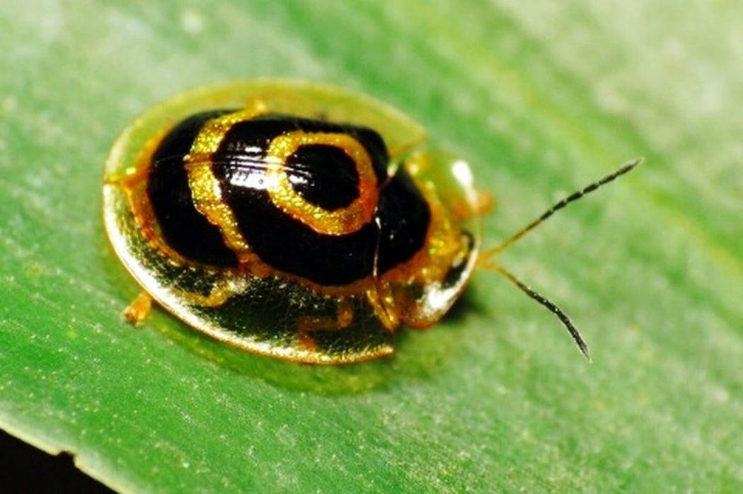 Insect Macro  Besourinho Animal Animal Themes Beautiful ♥ Nature :) <3 One Animal