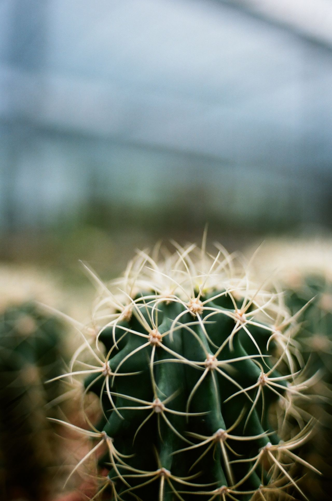 Beauty In Nature Cactus Close-up Day Film Photography Filmisnotdead Focus On Foreground Green Color Growth Nature No People Outdoors Plant Spiked Succulent Plant Succulents Thorn