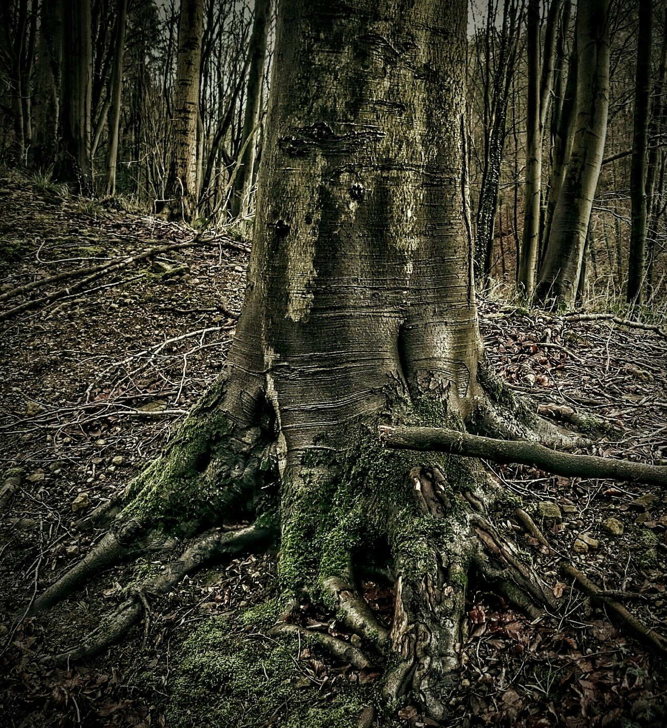 Treetrunk Mosscovered Mossy Tree Taking Photos HDR Hdr_Collection WoodLand Patterns In Nature Nature Beauty In Nature Eeyemgallery Eerie Scene Eerie Tree