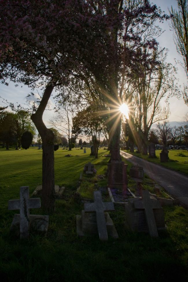 Tree Cemetery Tombstone Death Sun Grass Branch The End Tree Trunk Gettyimages Sunlight Park - Man Made Space Memories Graveyard Nature Place Of Burial Sunbeam Sky Tranquility Outdoors Beauty In Nature The Way Forward Walking Around Getty Collection Eyeem Market