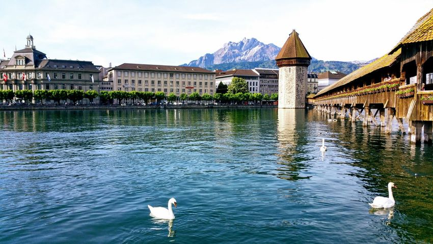Swan Water Vintage Old Harbor Water Architecture Lake Travel Destinations Building Exterior Bird Outdoors