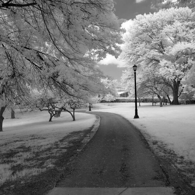 IMG_2423 by polishamericanphotographer on Flickr. Just follow this link to see and comment on this photo: https://flic.kr/p/t89qth Cleaveland CLE  Cleveland ClevelandOhio1796 Ohio UniversityCircle WadeLagoon CuyahogaCounty EastSide Water Beautifulohio Blackandwhite Blacknwhite Infrared CanonG11 InfraredCanonG11 Canon TeamCanon Digitalcamera Digitalphotography Digitalphoto PointNShot PointandShot Powershot ThisisCLE