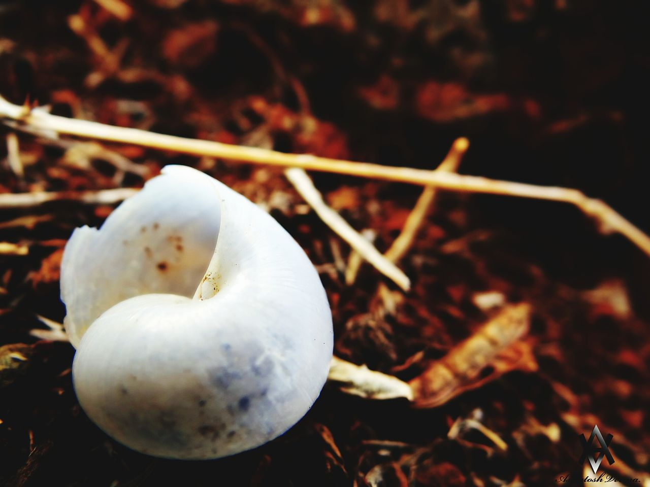 white color, food, food and drink, no people, close-up, healthy eating, outdoors, day, mushroom, nature, freshness, fragility