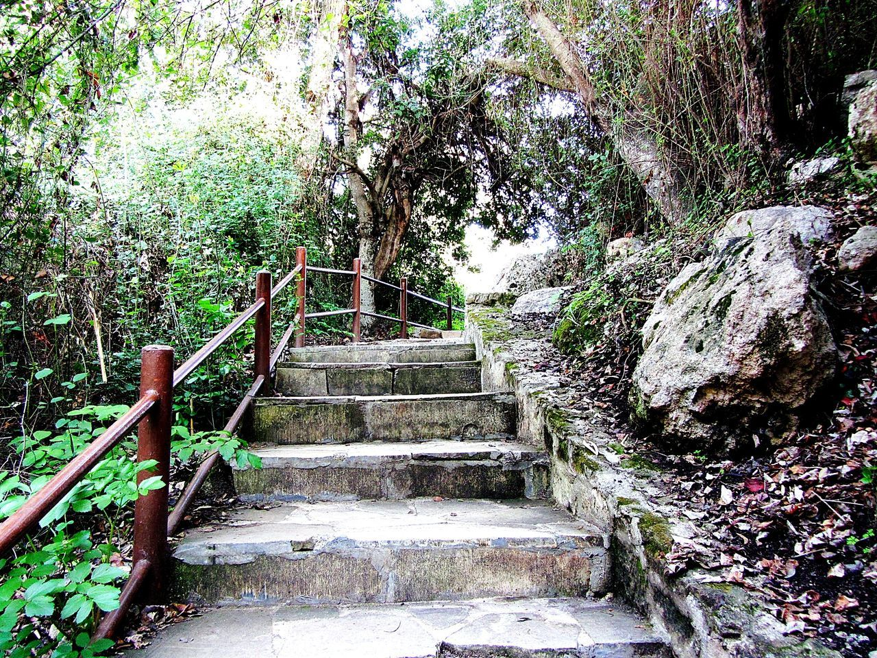 steps, staircase, tree, steps and staircases, nature, growth, tranquility, railing, stairs, tranquil scene, day, the way forward, no people, beauty in nature, forest, plant, outdoors, branch