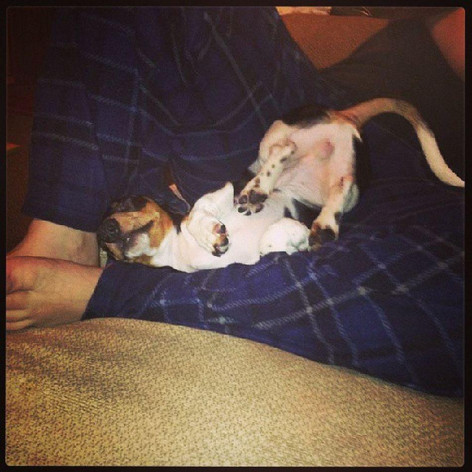Awkwardsleep Funnydog Weirddogsofinstagram Dogsofinstagram